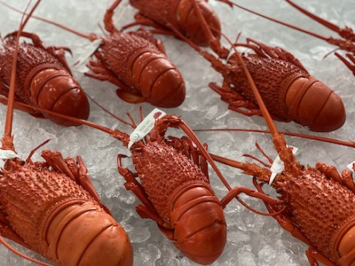 Lobster.1
